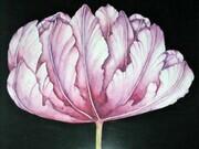 Tulip Study 1