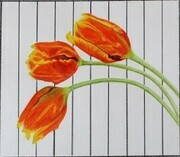 Tulips and Stripes